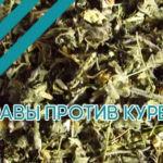 Травы против курения: народные средства